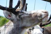 北海道道北。我在北緯45度遇見日本最北馴鹿TONAKAI牧場:北海道名寄馴鹿觀光牧場 (18).JPG