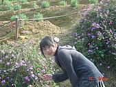 2007台中薰衣草:1554736865.jpg