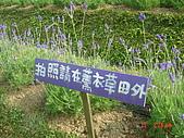2007台中薰衣草:1554736870.jpg