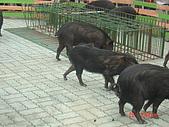 2007成豐夢幻公園:1939779130.jpg