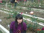 2008士林玫瑰季:1252363523.jpg