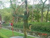 2008士林玫瑰季:1252363524.jpg