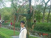 2008士林玫瑰季:1252363525.jpg