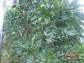 2007北關農場:1913906901.jpg