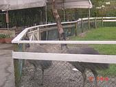 2008皇后鎮森林:1470380764-dsc04741.jpg