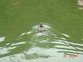 2007北關農場:1913906907.jpg