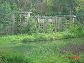 2008士林玫瑰季:1252363530.jpg