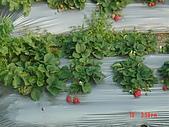 2007湖莓戀:1066311890.jpg