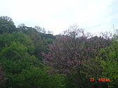 2008陽明山花季:1157834973.jpg