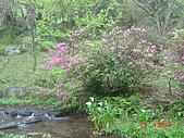 2008陽明山花季:1157834977.jpg