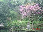2008陽明山花季:1157834981.jpg