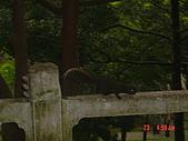 2008陽明山花季:1157834983.jpg