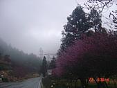我在合歡山上遇見雪:DSC06442.JPG