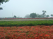 2008大溪花海:1154525913.jpg