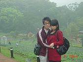 2008大溪花海:1154525914.jpg
