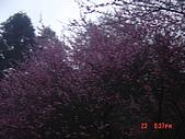 我在合歡山上遇見雪:DSC06445.JPG