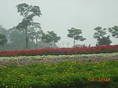 2008大溪花海:1154525915.jpg