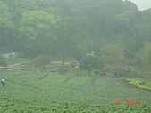 2008大溪花海:1154525916.jpg