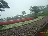 2008大溪花海:1154525918.jpg