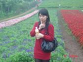 2008大溪花海:1154525919.jpg