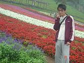 2008大溪花海:1154525920.jpg