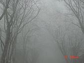 2009太平山之旅:1428007108-dsc04897.jpg