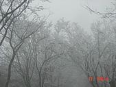 2009太平山之旅:1428007110-dsc04899.jpg