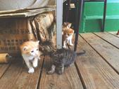蹲蹲野桐:工坊的小貓🐱