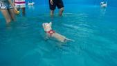 1030513~今夏第一游之 Good dog妙狗寵物游泳池:1030513-03-Good dog妙狗寵物游泳池048.jpg