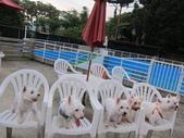 1030513~今夏第一游之 Good dog妙狗寵物游泳池:1030513-03-Good dog妙狗寵物游泳池218.JPG