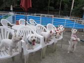 1030513~今夏第一游之 Good dog妙狗寵物游泳池:1030513-03-Good dog妙狗寵物游泳池219.JPG