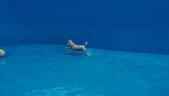 1030513~今夏第一游之 Good dog妙狗寵物游泳池:1030513-03-Good dog妙狗寵物游泳池049.jpg