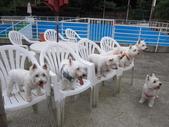 1030513~今夏第一游之 Good dog妙狗寵物游泳池:1030513-03-Good dog妙狗寵物游泳池222.JPG