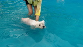 1030513~今夏第一游之 Good dog妙狗寵物游泳池:1030513-03-Good dog妙狗寵物游泳池056.jpg