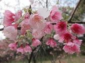1040211~原來這麼近賞櫻點之 壽山櫻花園:1040211-03-壽山櫻花園041.JPG