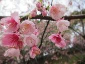 1040211~原來這麼近賞櫻點之 壽山櫻花園:1040211-03-壽山櫻花園047.JPG