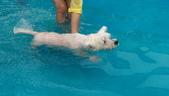1030513~今夏第一游之 Good dog妙狗寵物游泳池:1030513-03-Good dog妙狗寵物游泳池059.jpg