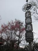 1040130~新北近郊賞櫻之 土城太極嶺:1040130-02-土城太極嶺016.JPG