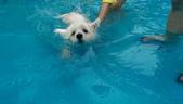 1030513~今夏第一游之 Good dog妙狗寵物游泳池:1030513-03-Good dog妙狗寵物游泳池086.jpg