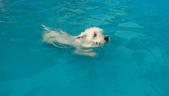 1030513~今夏第一游之 Good dog妙狗寵物游泳池:1030513-03-Good dog妙狗寵物游泳池109.jpg