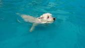 1030513~今夏第一游之 Good dog妙狗寵物游泳池:1030513-03-Good dog妙狗寵物游泳池110.jpg