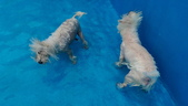 1030513~今夏第一游之 Good dog妙狗寵物游泳池:1030513-03-Good dog妙狗寵物游泳池121.jpg