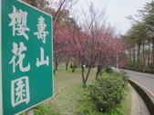 1040211~原來這麼近賞櫻點之 壽山櫻花園:1040211-03-壽山櫻花園032.JPG