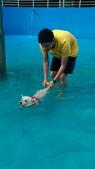 1030513~今夏第一游之 Good dog妙狗寵物游泳池:1030513-03-Good dog妙狗寵物游泳池127.jpg