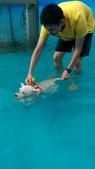 1030513~今夏第一游之 Good dog妙狗寵物游泳池:1030513-03-Good dog妙狗寵物游泳池131.jpg