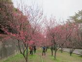 1040211~原來這麼近賞櫻點之 壽山櫻花園:1040211-03-壽山櫻花園016.JPG