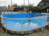 1030513~今夏第一游之 Good dog妙狗寵物游泳池:1030513-03-Good dog妙狗寵物游泳池003.JPG