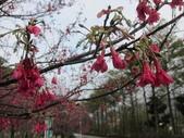 1040211~原來這麼近賞櫻點之 壽山櫻花園:1040211-03-壽山櫻花園031.JPG
