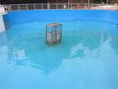 1030513~今夏第一游之 Good dog妙狗寵物游泳池:1030513-03-Good dog妙狗寵物游泳池004.JPG