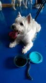 1030513~今夏第一游之 Good dog妙狗寵物游泳池:1030513-03-Good dog妙狗寵物游泳池157.jpg